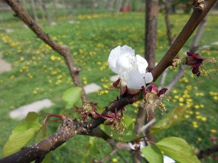 FOTKA - v prírode v apríli