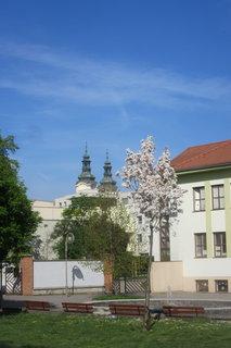 FOTKA - Uh. Hradiště na jaře