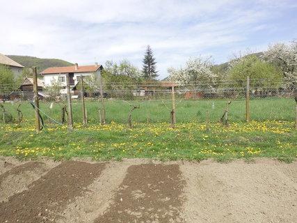 FOTKA - aprilová príroda v bielom a žltom prevládaní