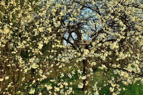 FOTKA - Totátní květenství