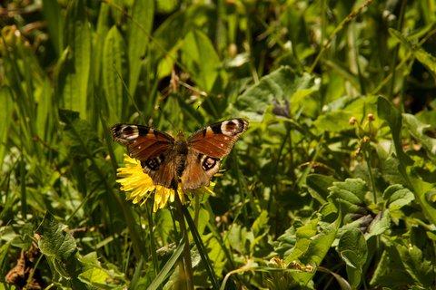 FOTKA - Lofer - Motýl