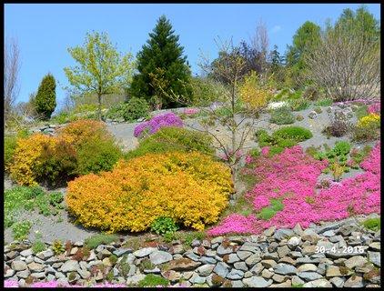 FOTKA - Jarní barevnost stráně