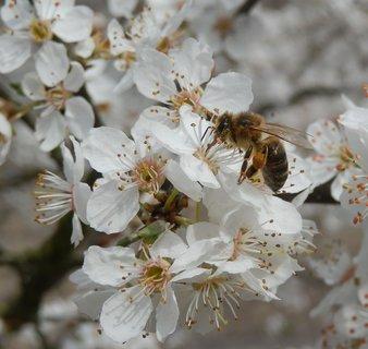 FOTKA - včelka se činí