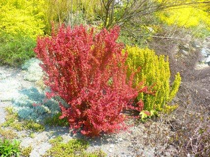 FOTKA - Jarní barvy