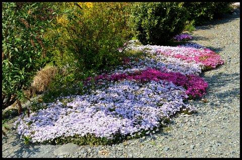 FOTKA - Přírodní koberec