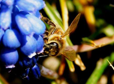 FOTKA - Včelka v modrém