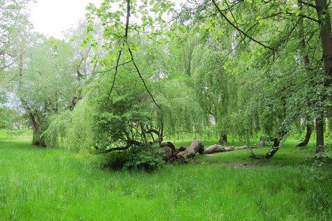 FOTKA - Ctěnice - procházka jarní zelení