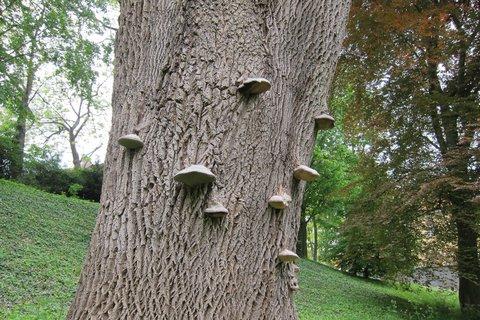 FOTKA - Ctěnice - zámecký park s krásnými stromy