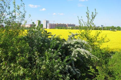 FOTKA - Sídliště v květu řepky