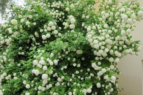 FOTKA - Ctěnice - procházka jarní zelení a mezi květy