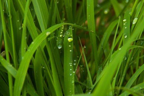 FOTKA - Seisenbergklamm - Kapky v trávě