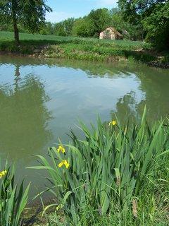 FOTKA - venkovský rybník