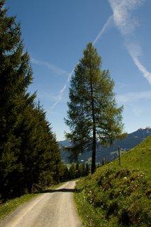 FOTKA - Biberg - Strom u cesty