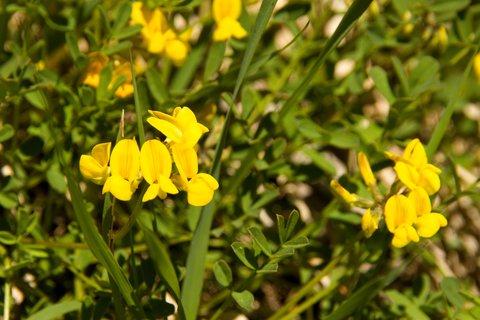 FOTKA - Eisriesenwelt - Žluté