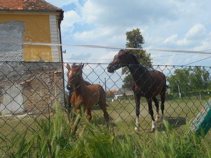 FOTKA - Koníci na zámečku