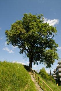 FOTKA - Zase jednou okolo Ritzensee - Strom u cestičky