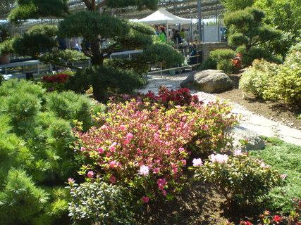 FOTKA - Venkovní výstaviště - rozkvetlé azalky