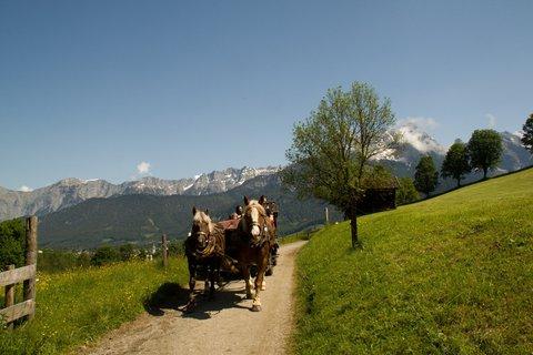 FOTKA - Zase jednou okolo Ritzensee - Koňské spřežení