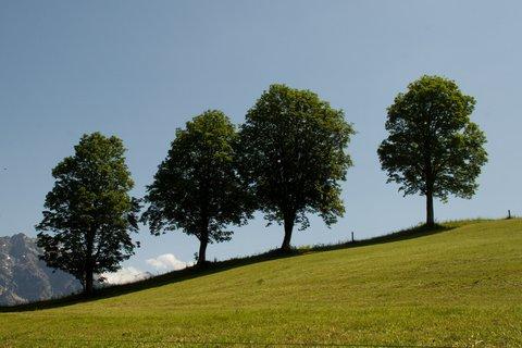 FOTKA - Zase jednou okolo Ritzensee - Čtyři stromy