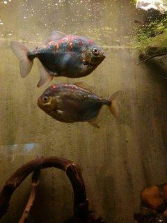 FOTKA - rybí rodinka