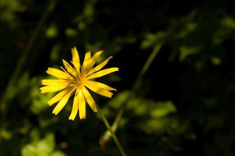 FOTKA - Znovu na Einsiedelei - Žlutá