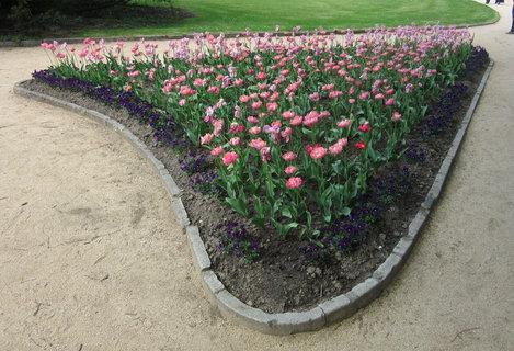 FOTKA - záhon tulipánů v Luhačovicích