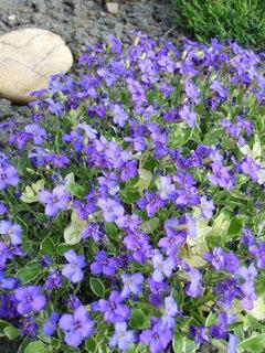 FOTKA - fialový koberec