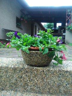 FOTKA - vyšperkovaný květináč