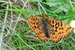 motýl..foto z procházky