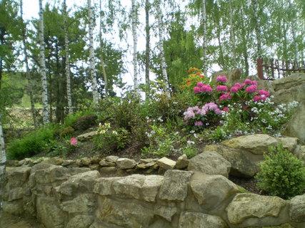 FOTKA - Rododendrony -Jeneč