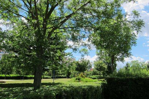 FOTKA - Z procházky parkem -  paneláky kryjí stromy
