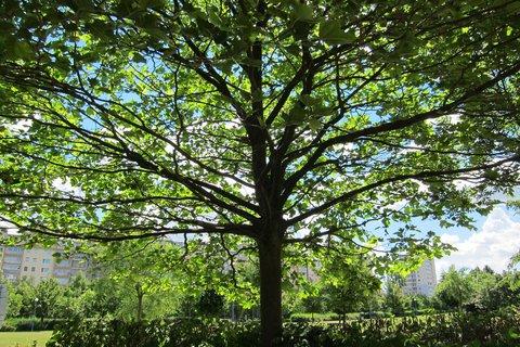 FOTKA - Z procházky parkem -  stín stromů se bude hodit