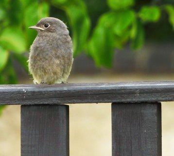 FOTKA - Měkoučké peří ptáčete