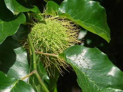 FOTKA - zajímavý plod