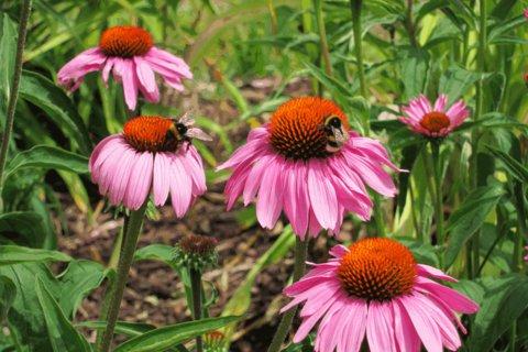 FOTKA - Kvetoucí krása