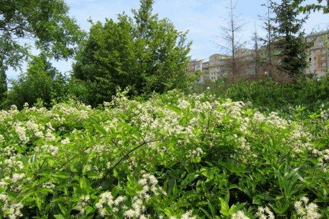 FOTKA - Osvěžující zeleň na sídlišti