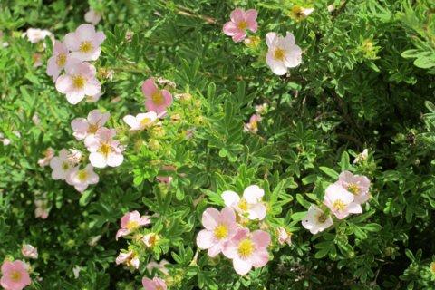 FOTKA - Kvetou všude