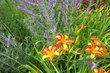 Kolem květů na sídlišti