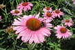 Květiny z procházky městem