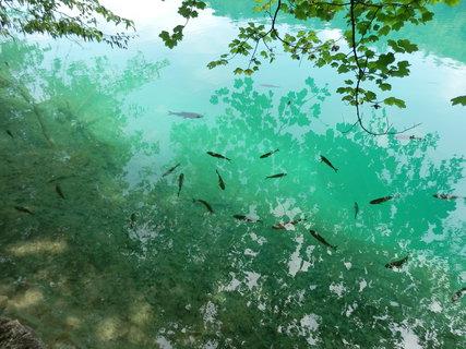 FOTKA - rybičky----Plitvická jezera