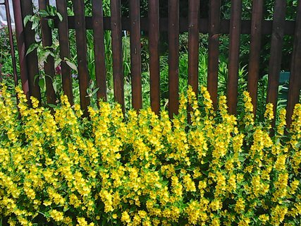 FOTKA - vrbina před plotem