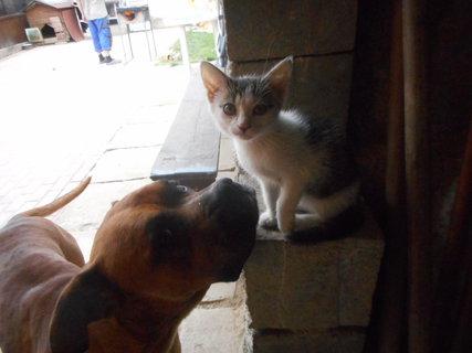FOTKA - kočka a pes
