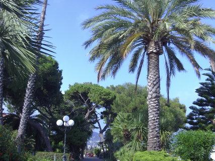 FOTKA - Palmy v parčíku