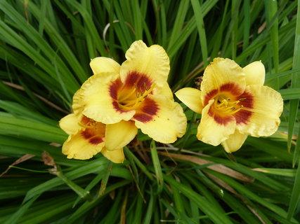FOTKA - Žluto hnědá trojka