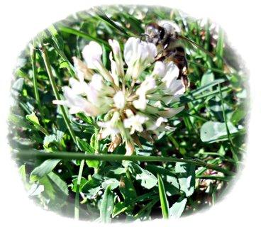 FOTKA - včielka na kvietku+
