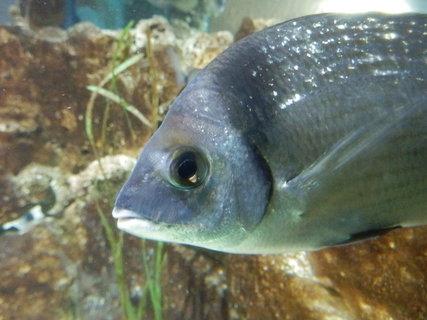 FOTKA - akvárium v Pule *
