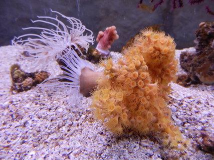 FOTKA - co žije v moři - akvárium v Pule *