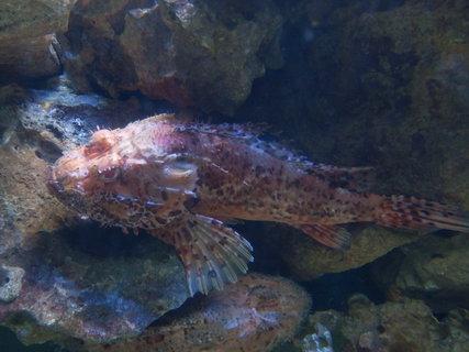 FOTKA - akvárium v Pule * seznamte se s rybami všech tvarů a barev
