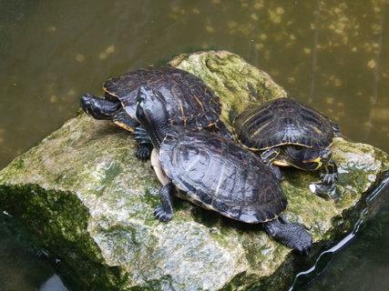 FOTKA - želvy