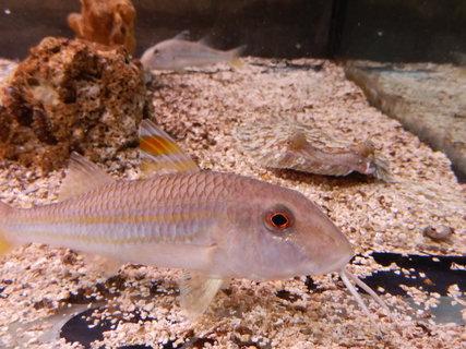 FOTKA - mořské akvárium v Pule * Chorvatsko